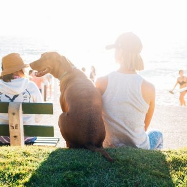 Dog Friendly Neighborhoods in San Diego